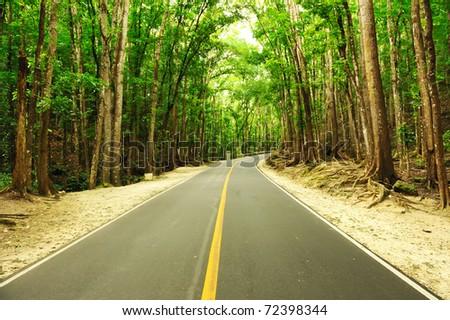 Road running through tropical rainforest