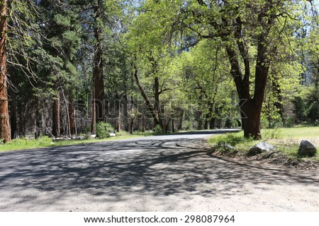 road side throughout forest