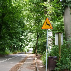 road sign beware of deer stands along the road against the background of trees in the forest