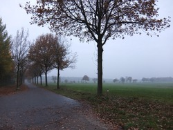 Road that gets lost in the fog. Trees at the side. The meadows are green. In the distance a row of trees shows up in the mist.  Rural landscape. It's November. Taken in Germany.