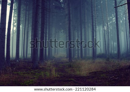 Road through a blue forest with fog and cold light