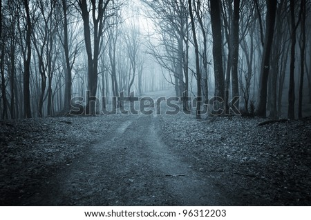 road through a dark forest at night - stock photo