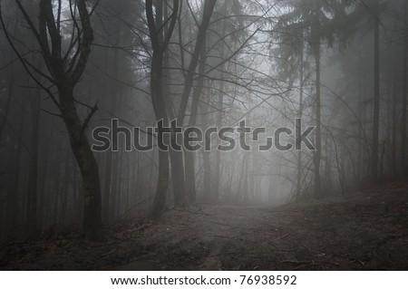 road through a dark grey forest
