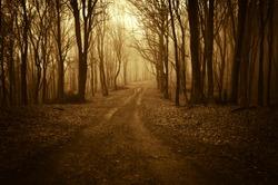 road through a golden forest