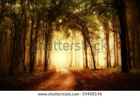 road through a golden forest at autumn
