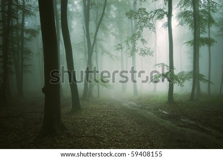 road through a green forest with old trees