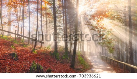 Stock Photo Road through an autumn forest and sun rays - Cheerful panorama with a path through the colorful forest with autumn leaves, under the dreamy light of the October sun rays, in the Bavarian woods.
