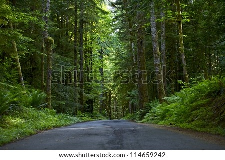 Road Through Deep Forest. Olympic National Park, Washington USA. Olympic Peninsula Photo Collection.
