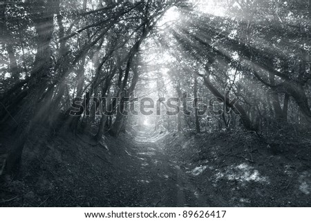 Road through forest with fog at sunrise
