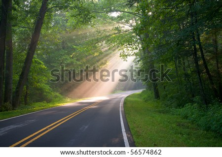 Road through forest with light beams and sun rays through green trees