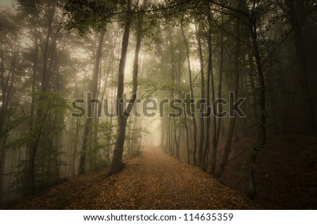 road through green forest