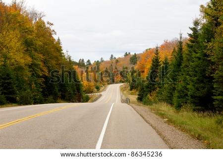 Road through in Algonquin Park