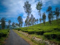 Road through Tea Plantations in Kerala, Wayanad