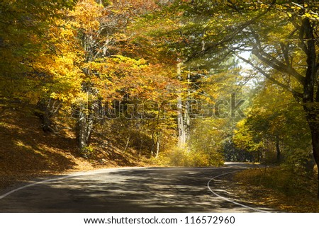 Road through the autumn forest at sunny day