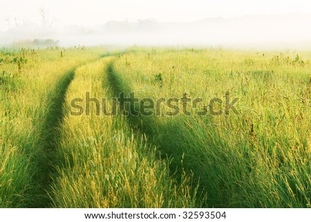 road through the meadow in the morning