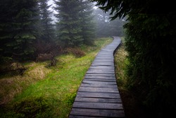 Road through the misty forest. Morning walks in the woods.