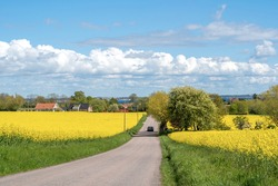 Road through the raps field in a sunny day, South Sweden