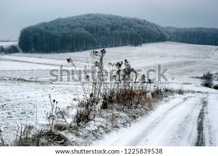 Road through the snowing fields with forest on the horizon. Frozen plants in the foreground. Frozen plants in the foreground.  #1225839538