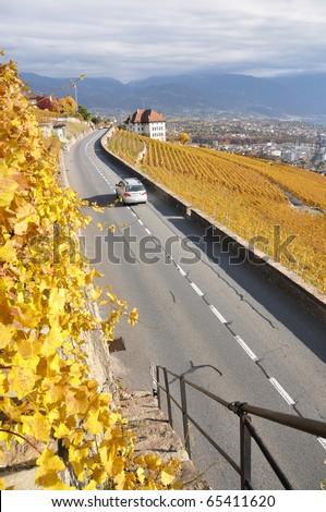 Road through the vineyards in Lavaux region, Switzerland