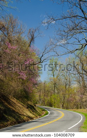 Road to forest in spring with blossoming tress - Shenandoah Virginia United States