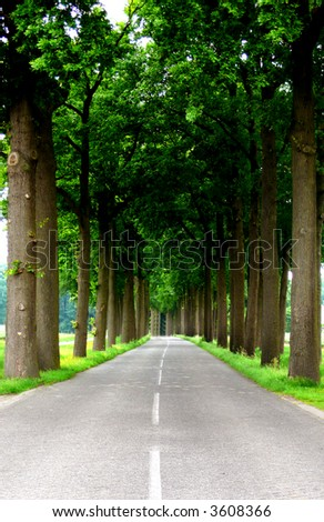 road to success in the countryside with trees on both sides of the road - stock photo