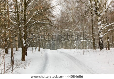 Road to winter wood