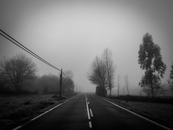 road together trees wrapped in a dense and cold fog