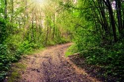 Road (trail, pathway, footpath) in summer forest. Spring trail hiking road in green forest morning fog. Pathway road in mountain forest scenic mystery landscape. Early autumn trail way through woods
