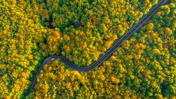Road trip perfect road winding its way through thick forest