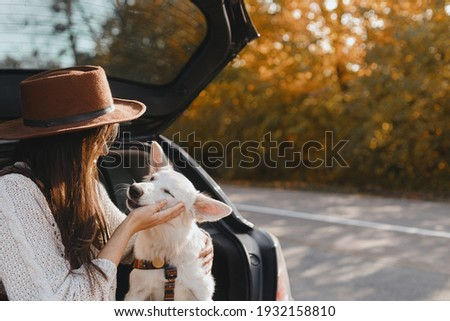 Road trip with pet. Stylish young woman caressing cute white dog in car trunk at sunny autumn road. Happy female traveling with swiss shepherd puppy and exploring world together. Space for text