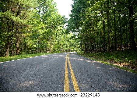 Road turning among trees with light green leaves in the summer forest of the Shenandoah National Park, Virginia, USA.