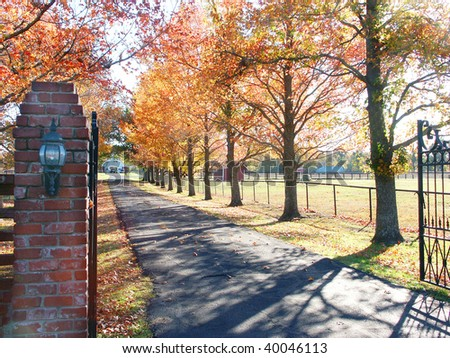 Road with fall trees