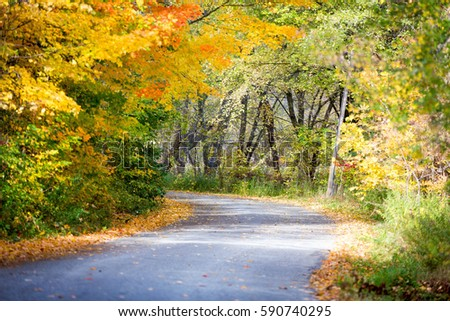 Road with fall trees #590740295