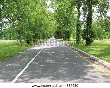 road with line of trees