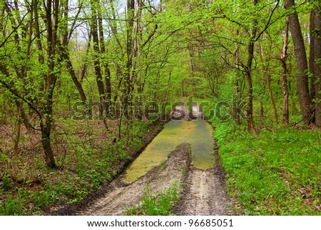 road with pond in a spring forest