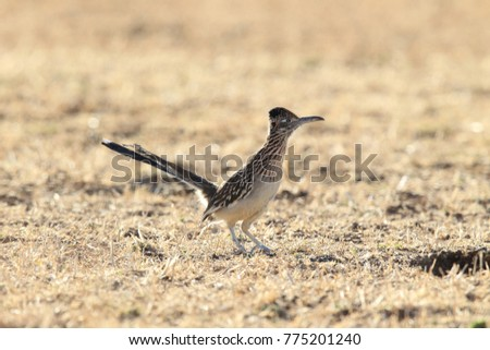 Shutterstock Roadrunner Bosque del Apache wildlife refuge in New Mexico