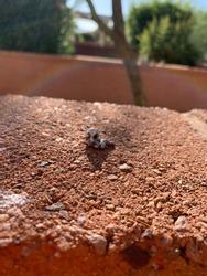 Roadrunner scat, bird poop, on brick fence in Arizona desert