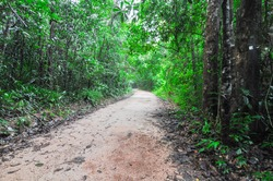 Roads in tropical rainforest, nobody in forest