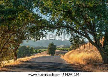 Roadtrip in Sonoma County wine country, California, USA