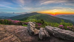 Roan Mountain State Park, Tennessee, rhododendron bloom
