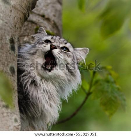 roaring cat #555829051