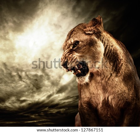 Stock Photo Roaring lioness against stormy sky