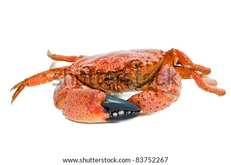 roasted crabs prepared on white