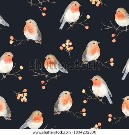 Robin birds and berries rowan on dry branches, seamless Christmas pattern, winter watercolor illustration, print on dark background. Zdjęcia stock ©