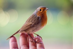 robin eating from a woman's hand