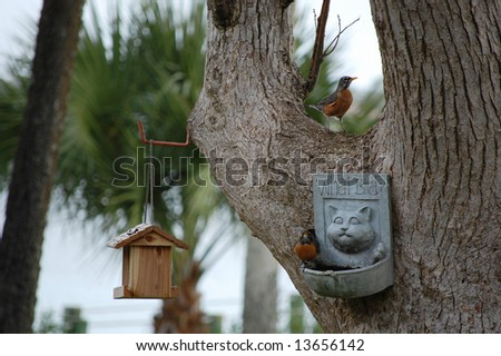 Robins enjoying their birdfeeders and bath