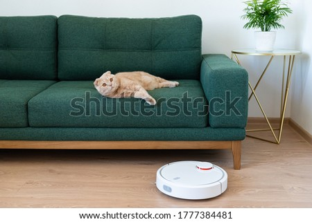 Robotic vacuum cleaner cleaning the room while cat relaxing on sofa. Housekeeping help, new technology, smart home, daily vacuuming. Side view