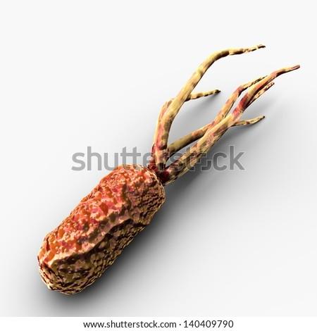 Rochalimaea Bacteria
