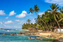 Rock and palm tree at Dalawella Beach in a sunny day in Sri Lanka