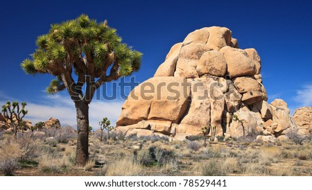 Rock climbers' spot in Joshua Tree National Park, California.